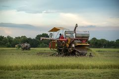 Combine harvesting the wheat. In Thailand Royalty Free Stock Photo