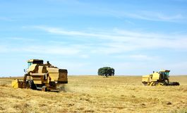 Combine harvesting wheat in  field. Royalty Free Stock Photography