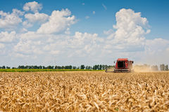 Combine harvesting wheat. Stock Images