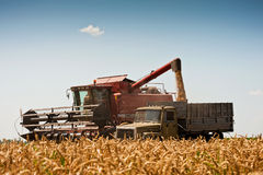 Combine harvesting wheat. Stock Image