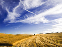 Combine harvesting a wheat field. Typical summer image. Harvesting series Stock Image