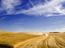Combine harvesting a wheat field Royalty Free Stock Photos
