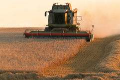 Combine harvesting the wheat field. On a sunset Stock Photo