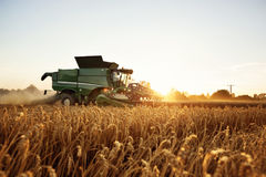 Combine harvesting on a wheat field. Combine harvester is through a wheat field while the sun is setting behind it. The foreground contains ears of wheat Stock Images