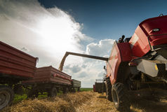 Combine harvesting wheat. And filling trailer Stock Photos