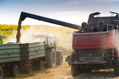 Combine harvesting wheat. And filling trailer Royalty Free Stock Photo
