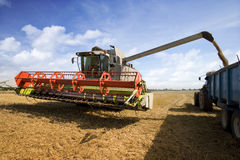 Combine harvesting wheat and filling trailer in sunny, rural field Stock Photography