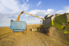 Combine harvesting wheat and filling trailer in sunny, rural field Royalty Free Stock Photo