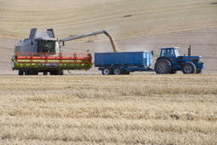 Combine harvesting wheat and filling trailer in sunny, rural field Royalty Free Stock Image