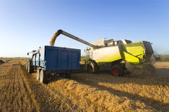 Combine harvesting wheat and filling trailer in sunny rural field Stock Photo