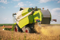 Combine harvesting wheat. Combine harvesting golden yelow wheat Royalty Free Stock Photography