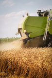 Combine harvesting wheat. Combine harvesting golden yelow wheat Royalty Free Stock Images