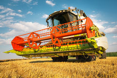 Combine harvesting wheat. Combine harvesting golden yelow wheat Royalty Free Stock Photos