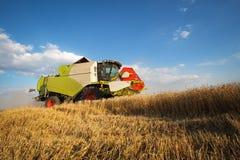 Combine harvesting wheat Royalty Free Stock Image