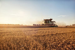 Combine harvesting wheat. A combine harvester cutting wheat on a wide field. The foreground contains an area of the field thats already cut. Nice weather with a Stock Photography