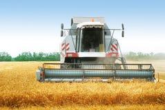 Combine harvesting wheat Royalty Free Stock Photos