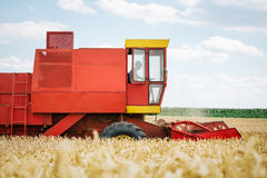 Combine harvesting wheat. Red Combine harvesting golden wheat Royalty Free Stock Images