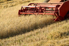 Combine harvesting wheat. Red combine harvester working a wheat field Royalty Free Stock Photography