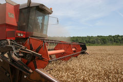 Combine harvesting wheat Royalty Free Stock Photography