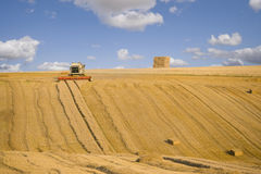 Combine harvesting wheat in sunny, rural field Royalty Free Stock Photography