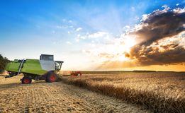 Combine harvesting the wheat on a sunset. Sunset royalty free stock image