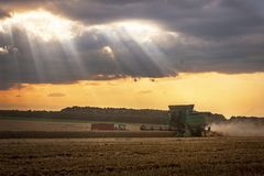 Combine harvesting the wheat. Combine harvesting the wheat on a sunset Royalty Free Stock Images