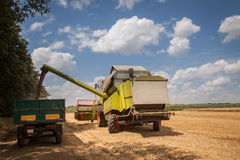 Combine harvesting wheat and unloading grains into tractor trailer. Cloudy sky Royalty Free Stock Image
