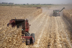 Combine Harvests Corn Royalty Free Stock Image