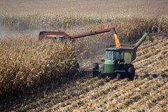Combine Harvests Corn. Combine harvisting corn, San Joaquin Delta, California Stock Photo