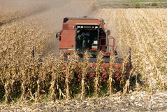 Combine Harvests Corn Royalty Free Stock Photography