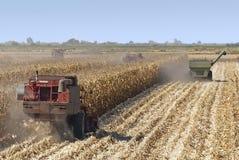 Combine Harvests Corn. Combine harvisting corn, San Joaquin Delta, California Royalty Free Stock Photography