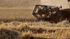 Combine harvests crops stock footage