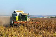 The combine harvests the harvest of sunflower. In the field. Ukraine royalty free stock photo