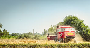 Combine harvests the wheat in a field in summer Stock Photo