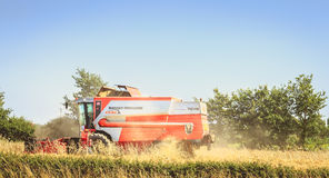 Combine harvests the wheat in a field in summer Royalty Free Stock Photography