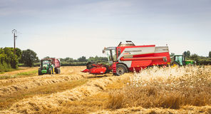 Combine harvests the wheat in a field in summer Royalty Free Stock Photo