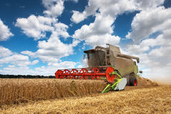 Combine harvests wheat Royalty Free Stock Image