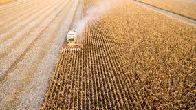 Harvesting of corn stock photo