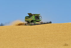 Combine havesting wheat in a field royalty free stock images