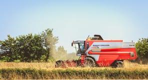 Combine las cosechas el trigo en un campo en verano Foto de archivo