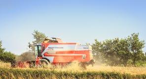 Combine las cosechas el trigo en un campo en verano Fotografía de archivo libre de regalías