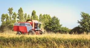 Combine las cosechas el trigo en un campo en verano Fotografía de archivo
