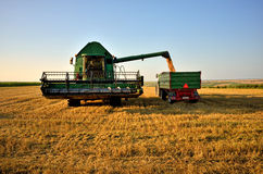 Combine load the crop in tractor trailer Stock Image
