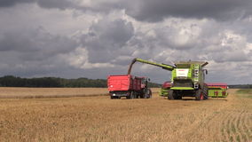 Combine load grain into trailer on cloudy sky background stock footage