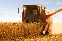 Combine Operator Harvesting Corn on the Field in Sunny Day Stock Images
