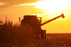 Combine Operator Harvesting Corn on the Field in Summer Evening Stock Photos