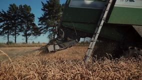 Combine straw chopper. Modern combine straw chopper works in field stock video footage