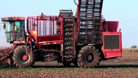Combine the sugar beet harvest stock video
