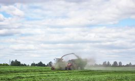 Agriculture machines harvesting clover for silage for feeding dairy cattle. Combine and tractor harvesting clover for silage for feeding dairy cattle royalty free stock photos