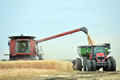 Combine and tractor harvesting wheat Royalty Free Stock Photography